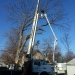 county-tree-service-chicago-illinois-tree-removal-1