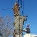 county-tree-service-chicago-illinois-tree-removal-10