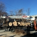 county-tree-service-chicago-illinois-tree-removal-14