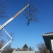 county-tree-service-chicago-illinois-tree-removal-2
