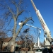 county-tree-service-chicago-illinois-tree-removal-3