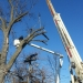 county-tree-service-chicago-illinois-tree-removal-4