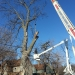 county-tree-service-chicago-illinois-tree-removal-5