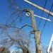 county-tree-service-chicago-illinois-tree-removal-6