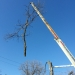 county-tree-service-chicago-illinois-tree-removal-7
