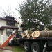 tree-removal-company-chicago-3