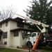 tree-removal-company-chicago-4