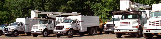tree-service-company-fleet.jpg
